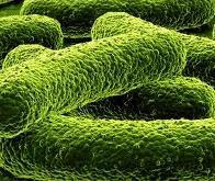 Les bactéries, futurs transistors de la bioinformatique ?