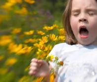 Les bases génétiques de l'allergie livrent leurs secrets