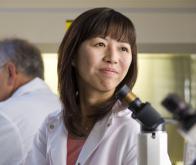 Les cellules-souches : nouvel outil thérapeutique contre les leucodystrophies