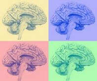 Les champs électromagnétiques pourraient influencer la mémoire