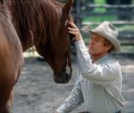 Les chevaux savent communiquer avec l'homme de manière complexe