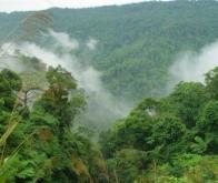Les émissions de CO2 dues à la déforestation revues à la baisse