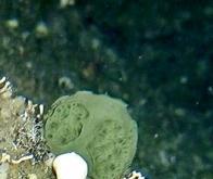 Les éponges de mer contre le cancer