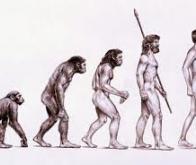 Les Hommes sont-ils devenus bipèdes pour porter la nourriture ?