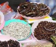 Les insectes : un aliment économique et écologique !
