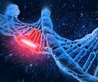 Les mutations de l'ADN filmées pour la première fois