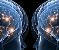 Les neurones miroirs seraient également sociaux