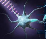 Les optoceutiques pour rétablir les fonctions biologiques