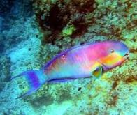 Les poissons pourraient s'adapter au réchauffement des océans