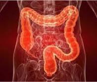 Les scientifiques identifient un mécanisme qui cause l'apparition du syndrome du côlon irritable