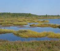 Les tourbières piègent le CO2, même en cas de sécheresse