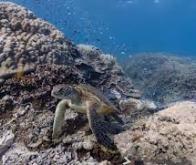 L'étude de micro-organismes dans les grands fonds marins de la fosse de Nankai au Japon permet de ...