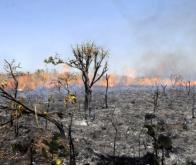 L'impact sur le climat des incendies de forêt en Amazonie est largement sous-estimé
