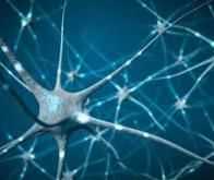 MAP6, une protéine neuronale dans la lumière des microtubules