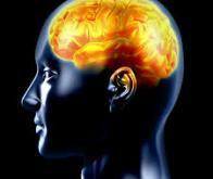 Mémoire : le cerveau adopte de nouvelles stratégies en vieillissant