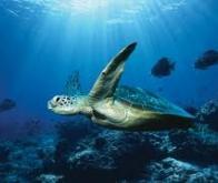 Mieux comprendre l'impact de l'acidification accélérée des océans