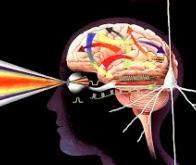 Modifier le cerveau pour restaurer la vue...