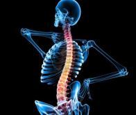 Moelle épinière : vers un médicament pour aider les neurones à se régénérer