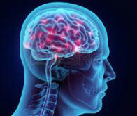 Notre système nerveux  transmet des informations sur plusieurs générations