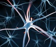 NsXeR : la protéine capable d'activer le neurone