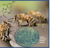 Pathogènes et insecticides : un cocktail mortel pour les abeilles