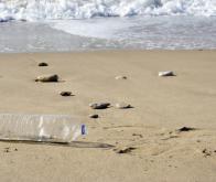Pollution de la Méditerranée : « inquiétante » dit un rapport sénatorial
