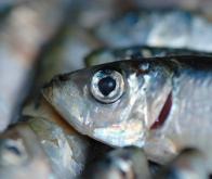 Polyarthrite rhumatoïde : mangez de l'huile de poisson !