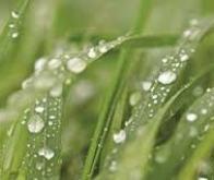 Pour mieux pousser, les plantes se souviennent qu'elles ont eu soif...
