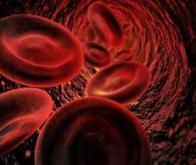 Premier essai réussi de thérapie génique contre l'hémophilie