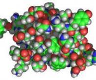 Première image 3D de la liaison entre l'insuline et son récepteur cellulaire