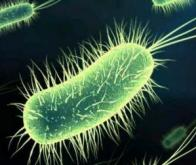Première modélisation numérique complète d'une bactérie
