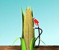 Première mondiale française : une bactérie transforme la biomasse en bioéthanol de 2ème génération