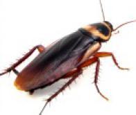 Première transplantation d'un nano-ordinateur à ADN dans un insecte…