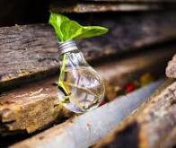 Produire de l'électricité avec des plantes