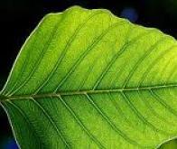 Quand la physique quantique explique la photosynthèse…