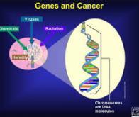 Quelle est la part de la génétique dans l'apparition des cancers ?