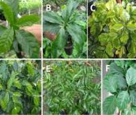 Réaliser le phénotypage des plantes par signature vibratoire