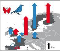 Réchauffement climatique : une réponse rapide mais retardée des oiseaux et papillons d'Europe