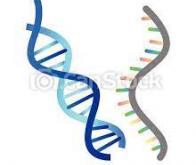 Séisme dans la biologie : il serait possible d'agir sur l'ADN avec l'ARN…