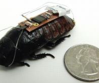 Un cafard robotisé pour espionner l'ennemi !