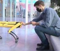 Un chien-robot pour accompagner l'homme dans les tâches difficiles