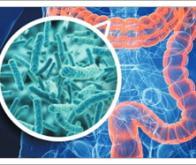 Un composé d'origine bactérienne associé à la diversité du microbiote intestinal et à une meilleure ...