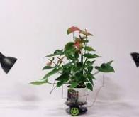Un cyborg botanique pour améliorer les capacités naturelles des plantes