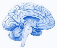 Un effet surprenant du bâillement sur le cerveau