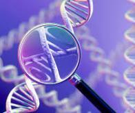 Un gène protecteur contre la maladie d'Alzheimer