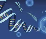 Un médicament dans un virus pour soigner une maladie génétique rare
