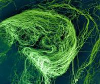 Un nanomatériau souple et ultra résistant