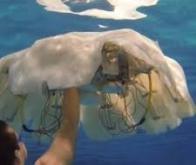 Un robot-méduse pour explorer les océans