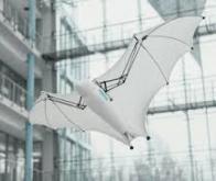 Un robot capable d'apprentissage automatique qui vole comme une chauve-souris