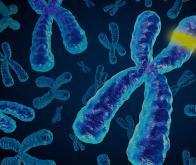 Un tiers des gènes s'exprimerait différemment en fonction du sexe